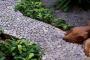 Что можно сделать из камней на даче своими руками - фото